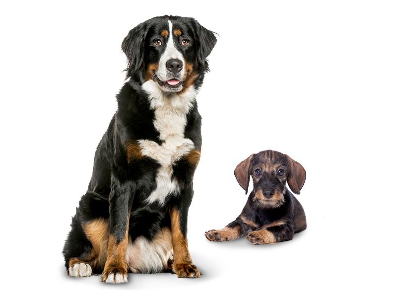 Hundenahrung DAS FUTTERHAUS