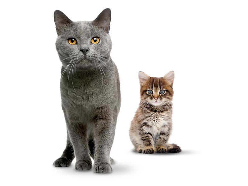 Katzenfutter DAS FUTTERHAUS