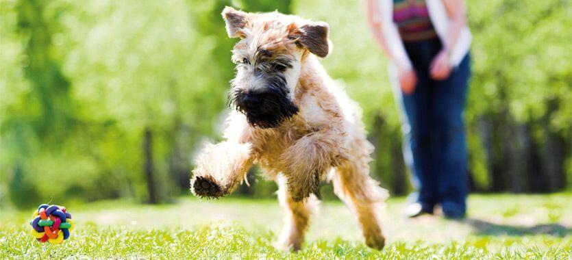 Spielender Hund im Park