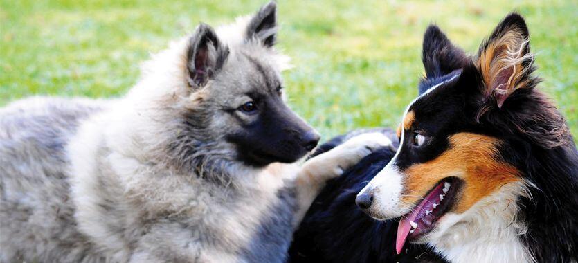 Sozialisierung von Hunden