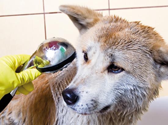 Hund wird gebadet