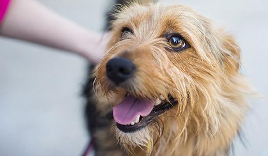[Translate to Österreich:] Belohnung für Hunde ohne Snacks