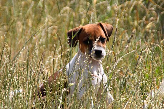 Feldspaziergang Hund