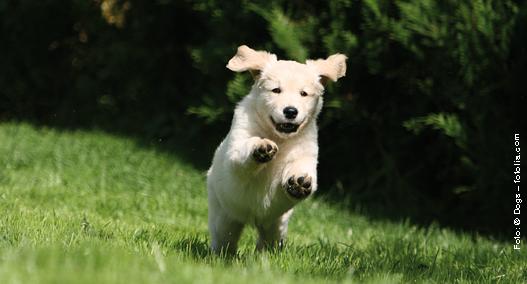 Junger Hund in Bewegung