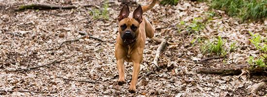 Joggen für die Fitness mit Hund