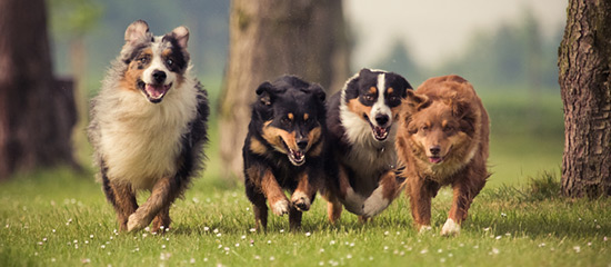 Auspowern auf der Hundewiese