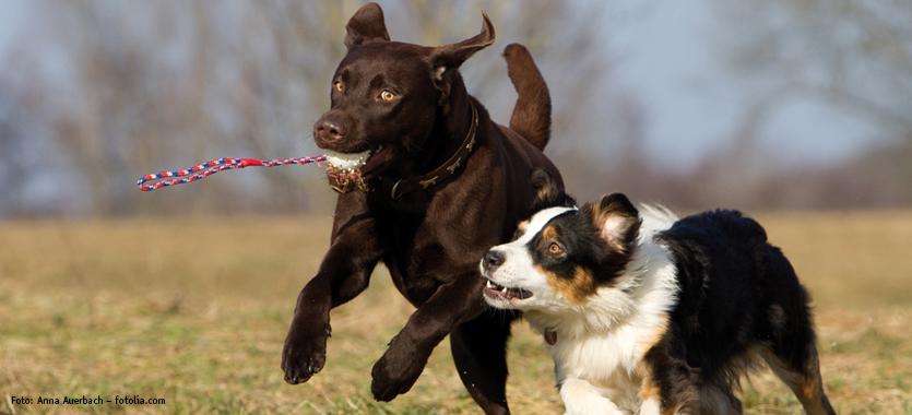 Hundewiese Das Futterhaus