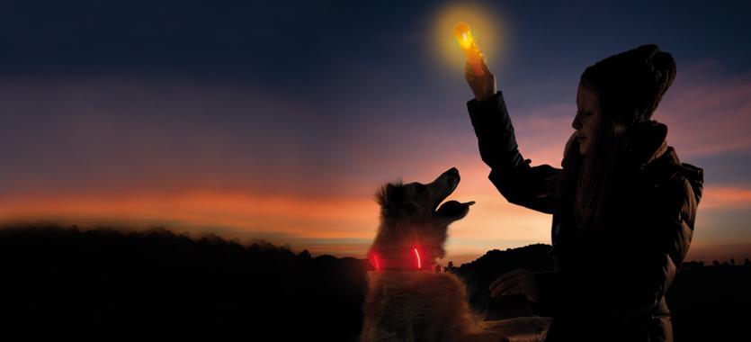 Leuchtendes oder reflektierendes Zubehör für Hund