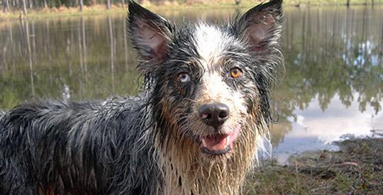 Hund schmutzig