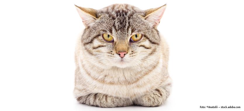 Katzen Körpersprache