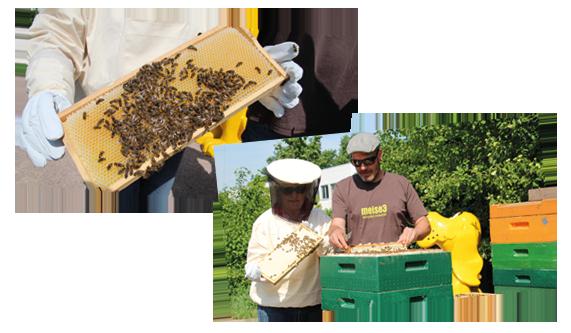 Artenschutz - Bienen an der DAS FUTTERHAUS Zentrale