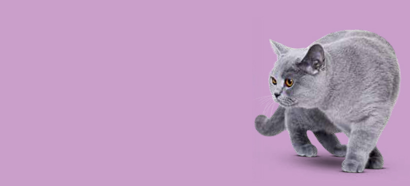 Tipps Katzenstreu