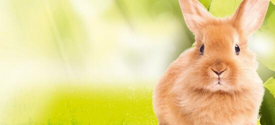 NATUR plus Kaninchen bei DAS FUTTERHAUS