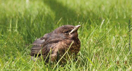 Sommer Vogel