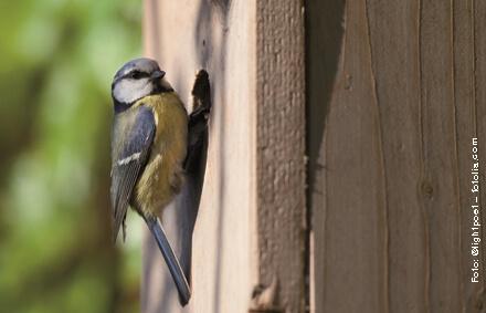 Vogelhaus Wildvogelfuetterung