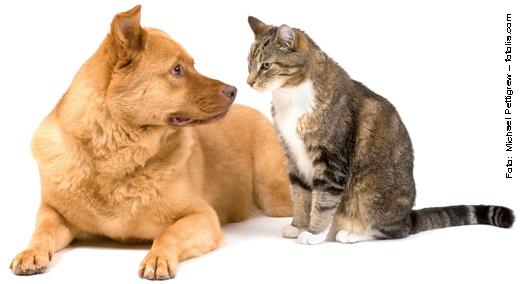 Kaltabfuellung Nassnahrung Hunde und Katze
