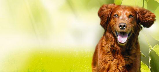 NATUR Plus für Hund