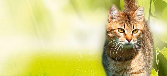 Natur Plus Katzen
