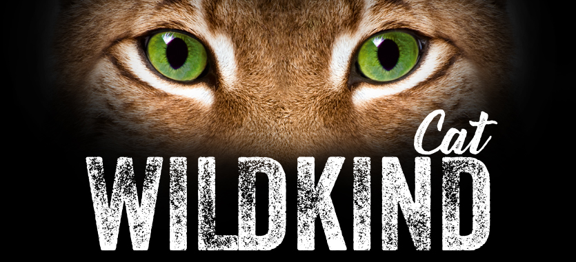WILDKIND fuer Katzen bei DAS FUTTERHAUS