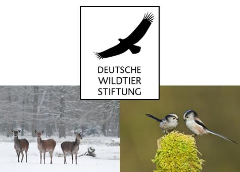 Deutsche Wildtierstiftung - Tierisch guter Einsatz 2020